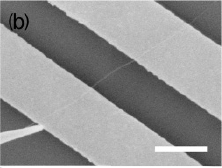 Manipulating a carbon nanotube onto electrodes.
